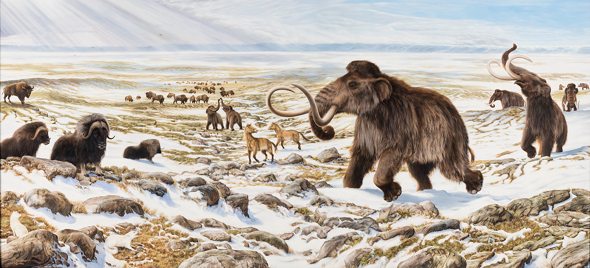 It's just an image of Agile Ice Ages Pictures